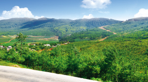 """20年退耕还林250.6万亩 约121.2万人直接受益 绿色成昆明高质量发展鲜明""""底色"""""""