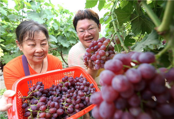 葡萄熟 游人乐