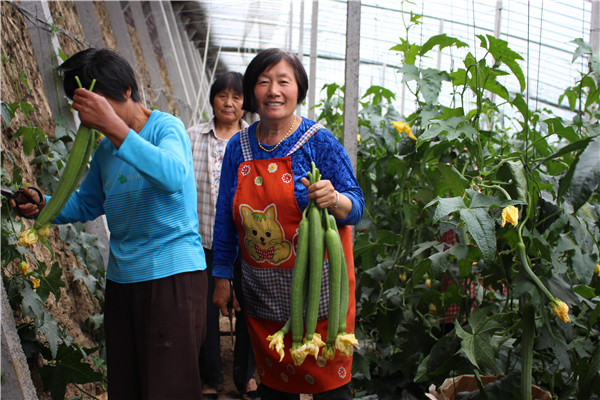 安徽泗县:做好土地文章 绿色产业富民