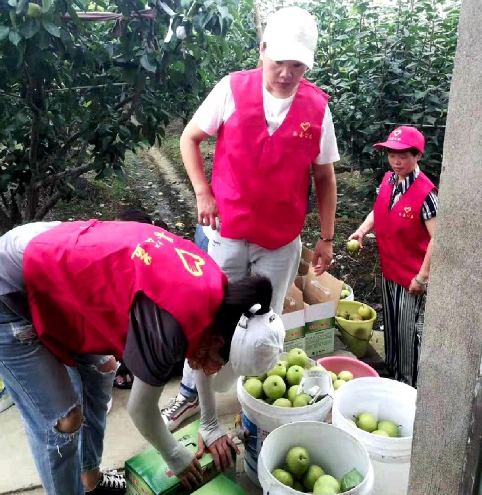 帮扶受伤果农渡难关 众善志愿者们在行动