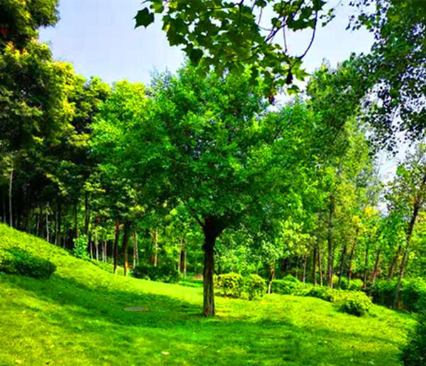重慶(qing)志拓園林綠化有限公司—詩情(qing)畫意的(de)譜(pu)寫(xie)者