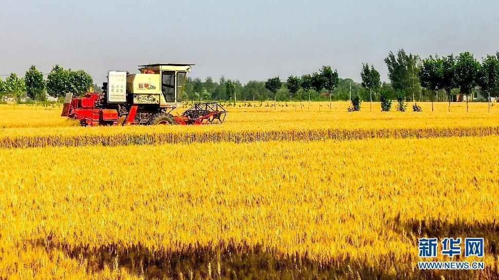 我国粮油产业加速走向品牌化
