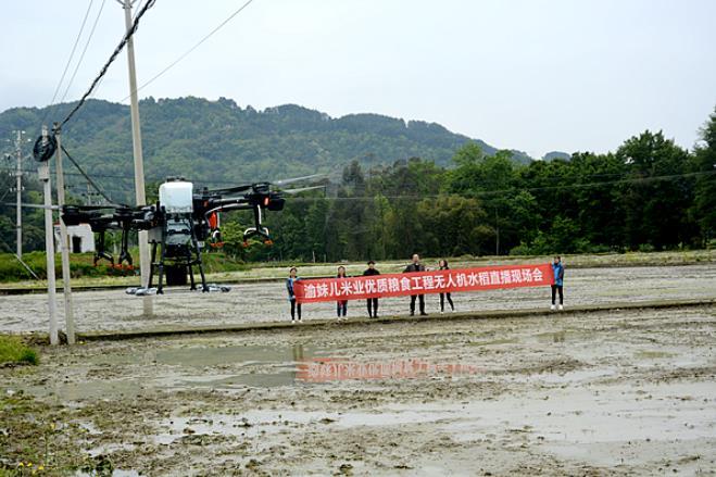"""渝妹儿稻香园用无人机""""直播""""让水稻种植更省时省力"""