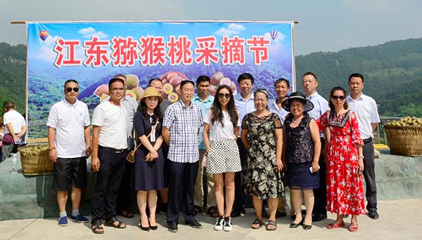 重庆涪陵:江东150亩猕猴桃开采 采摘期持续至国庆节