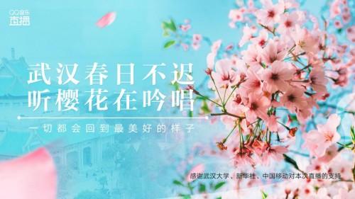 """武汉大学樱花开了!来QQ音乐直播间""""在线赏樱"""""""