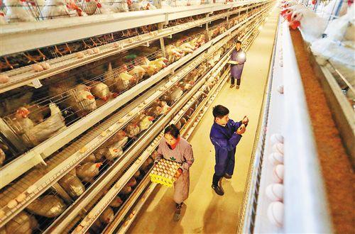 农业农村部:7月以来全国鸡蛋批发价格持续上涨